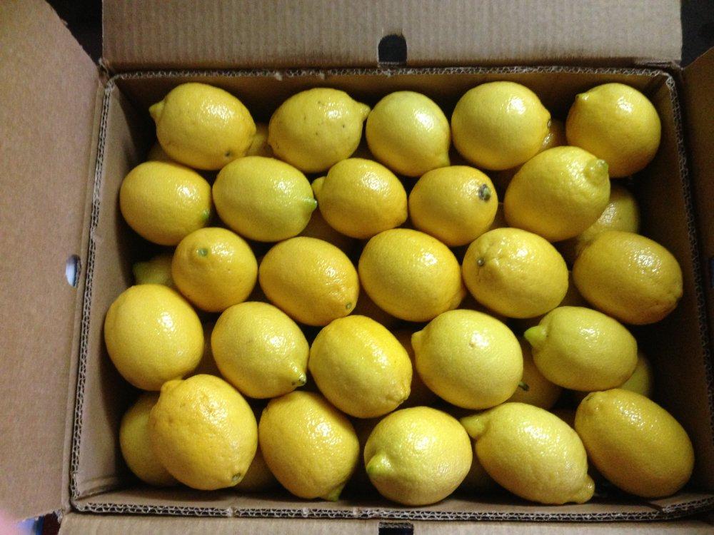 fresh_yellow_lemon