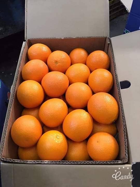 fresh_navel_orange_sizes_48_56_64_72_80_88_100