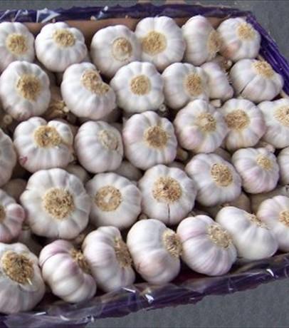 red_garlic
