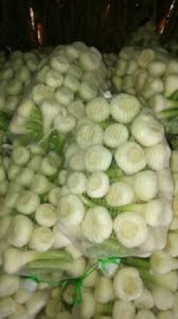 white_fresh_garlic