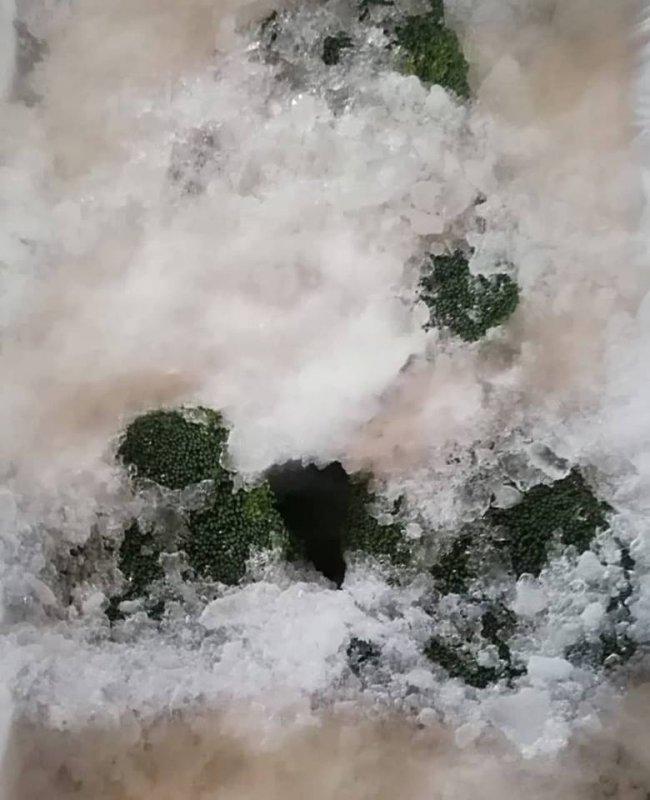 fresh_broccoli_new_crops