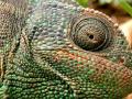 جلد الزواحف
