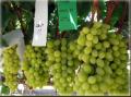 ARRA Grapes