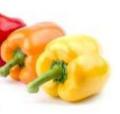 Coloured Pepper