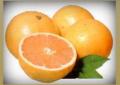 Baladi Oranges