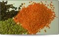 Lentil - all types