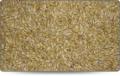 Barley grain - beans