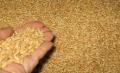 استيراد و تصدير الحبوب