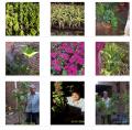 نباتات ظل