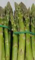 نبات الهيلون