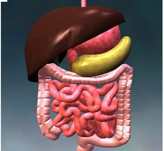 طلب الجهاز الهضمى و الكبد