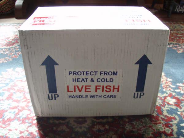 طلب النقل البحري للأسماك