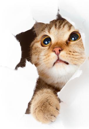 طلب بيع مستلزمات القطط بالتجزئه
