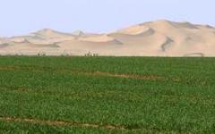 استصلاح وزراعة الاراضى الصحراوية بطرق زراعية حديثة