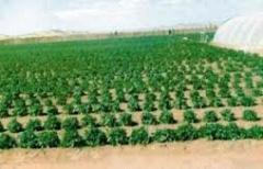الاشراف العام على المزارع المنتجة وحديثة الزراعة