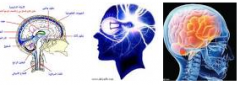 قسم جراحة المخ و الأعصاب