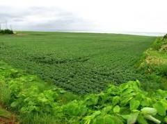 استصلاح الاراضى الزراعية