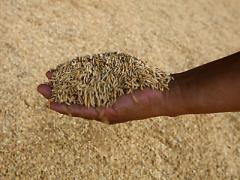 تصدير الحبوب