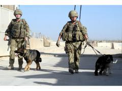 خدمات الأمن مع الكلاب