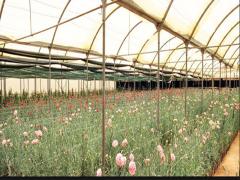 ادارة المشروعات الزراعية