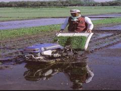 المشاريع الزراعية