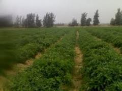 استشارات زراعية