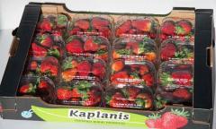 استيراد وتصدير الفواكه والخضروات الطازجة والمجمدة والمعلبة