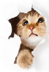 بيع مستلزمات القطط بالتجزئه