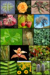 بيع النباتات