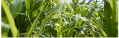 Fertilizer Group