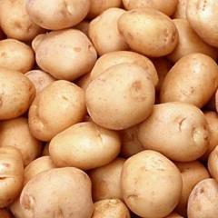 عمليات  الزراعة الآلية لمحصول البطاطس