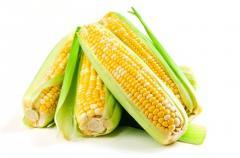 عمليات محصول الذرة
