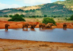 رحلات لافريقيا