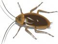 شركه الكنانه تمتلك اقوى المواد الفعاله فى مقاومه الحشرات  والقوارض بجميع انواعها والنتائج الايجابيه فى نفس الوقت مهما كان حجم الموسسه