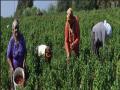 المشروعات الزراعية