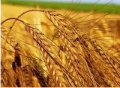 توريدات المنتوجات الزراعية