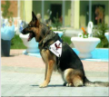 Security services with dogs